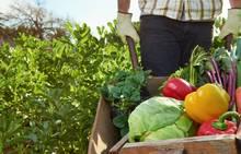 Նպաստավոր պայմաններ են ստեղծված գյուղատնտեսությունը մարզում զարգացնելու համար. 2019 թ. գյուղատնտեսության ոլորտում իրականացվելու են մի շարք ծրագրերՆպաստավոր պայմաններ են ստեղծված գյուղատնտեսո