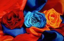 Լոռու մարզպետ Արթուր Նալբանդյանի շնորհավորական ուղերձը Հանրապետության օրվա առթիվ